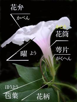 ★★★日の丸CIMG3854-3のコピー.jpg