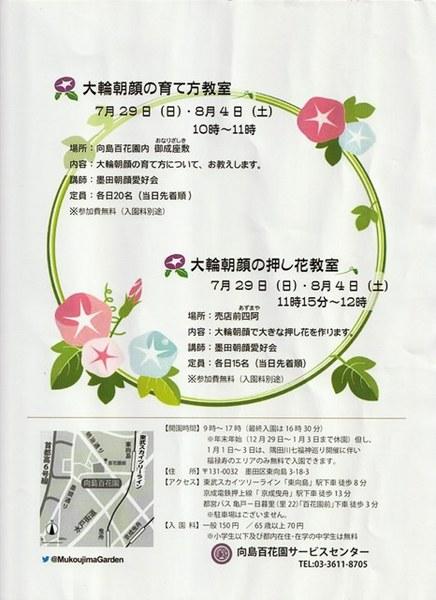 ★S向島百花園 大輪朝顔展2.jpg