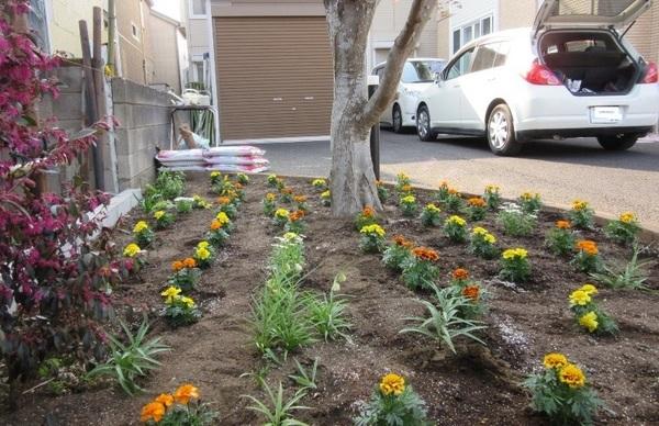 S花壇植栽完了.jpg