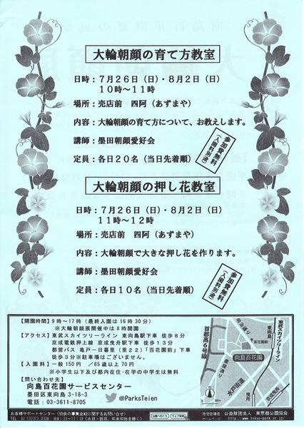 SS大輪朝顔の育て方と押し花教室のチラシ.jpg